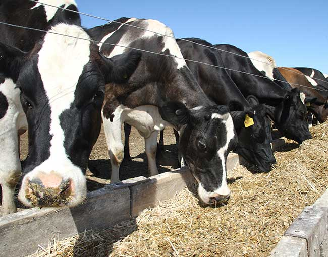 animal-supplement-regulations---fda_19925292854_o