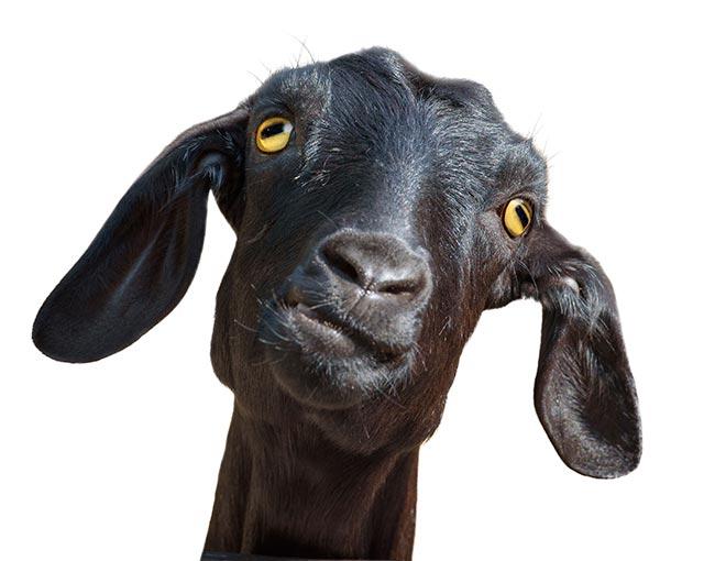 patent-litigation-ugly-truths---patent-billy-goat_25961385336_o