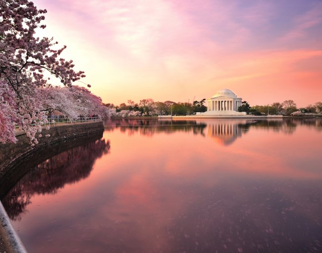 Cherry blossoms leaning over reflecting pool near Jefferson Memorial