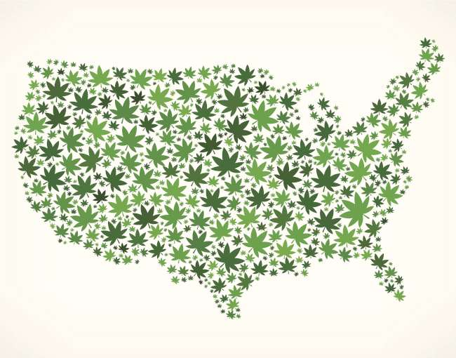 united states map made of cannabis plants