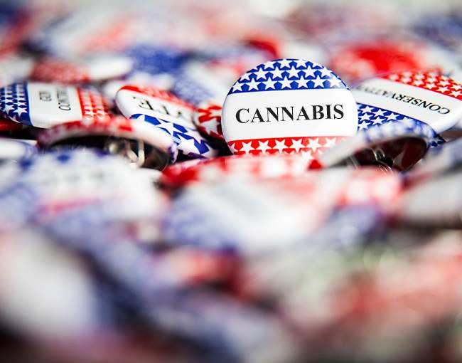 Cannabis political buttons